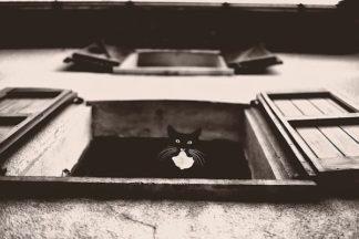 V590D - Van de Goor, Lars - Dali the Cat