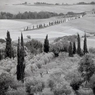 ABIT2279 - Blaustein, Alan - Tuscany #6