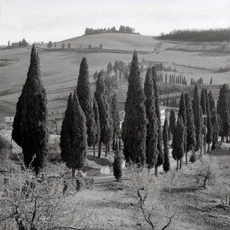 ABIT910 - Blaustein, Alan - Tuscany #4