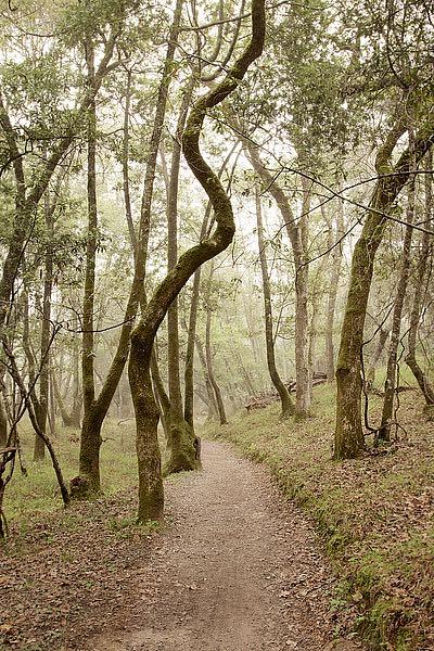 ABSFH63B - Blaustein, Alan - Oak Tree #48