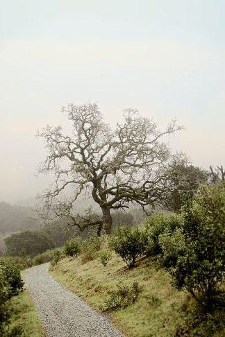 ABSFH64A - Blaustein, Alan - Oak Tree #45