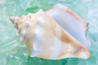 ABSHC293B - Blaustein, Alan - Crystal Cove #28