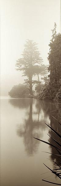 ABTRV40 - Blaustein, Alan - Lakeside Tree #2