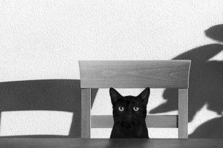 B3533D - Bertelli, Jon - Where Is My Coffee?