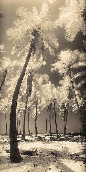 F244D - Friedman, Susan - Palm Shadows I
