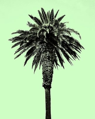A438D - Asla, Erik - Palm Tree 1996 (Green)