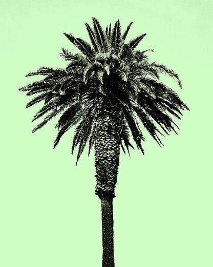 A438D - Asla, Erik - Palm Tree 1996 (Green)