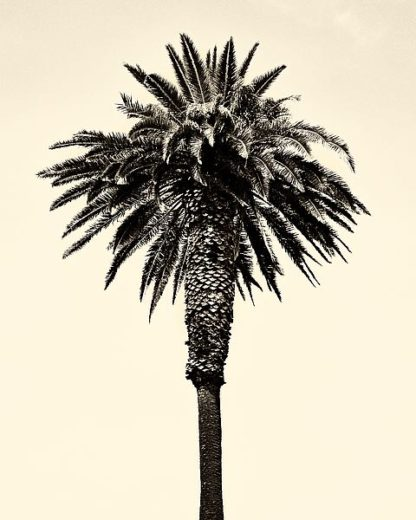 A440D - Asla, Erik - Palm Tree 1996 (Tan)