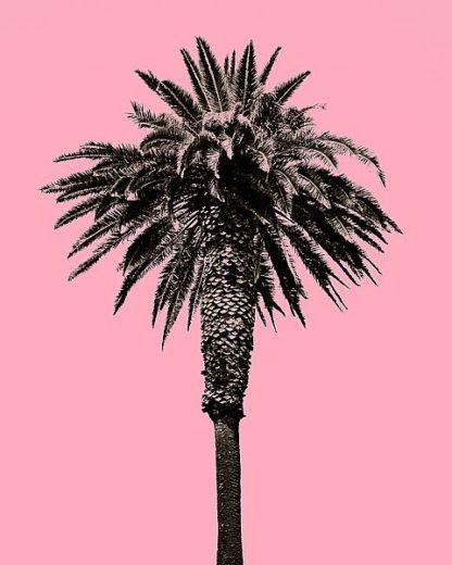 A441D - Asla, Erik - Palm Tree 1996 (Pink)