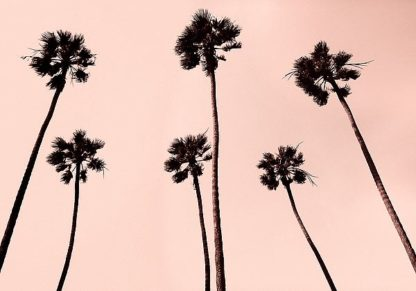A442D - Asla, Erik - Palm Trees 1997 Copper