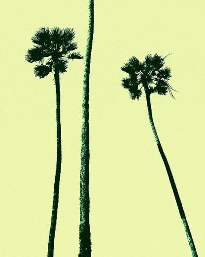 A443D - Asla, Erik - Palm Trees 2000 (Cyan)