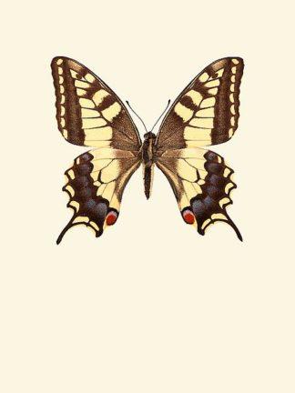 IN99040 - Incado - Papilio machaon