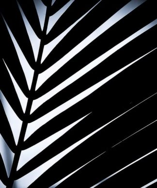 IN99052 - Incado - Close up VI