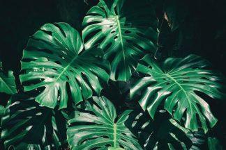 IN99075 - PhotoINC Studio - Tropical
