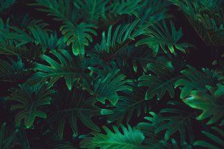 IN99076 - PhotoINC Studio - Tropical 2