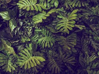 IN99078 - PhotoINC Studio - Tropical 4