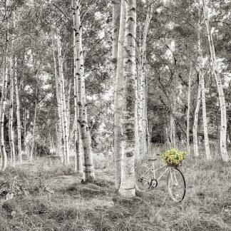 B3548D - Blaustein, Alan - Sunflower Bicycle Ride