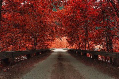 K2607D - Kostka, Vladimir - Bridge (Red)