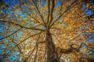O307D - Oldford, Tim - Fall Tree