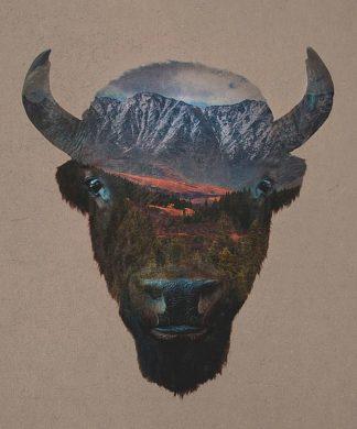 D1072D - Davies Babies - Bison Peak