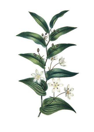 IN99045 - Incado - Botanica I