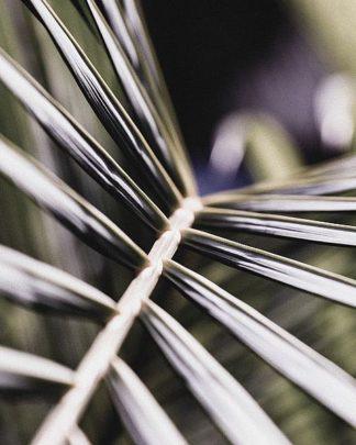 IN99084 - Incado - Close up XII