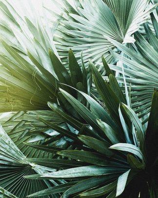 IN99086 - Incado - Leaf II