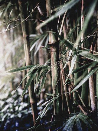 IN99087 - Incado - Leaf III