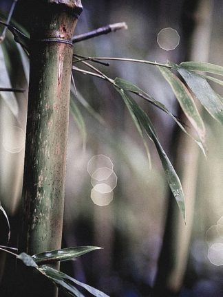 IN99088 - Incado - Leaf IV