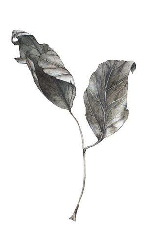 IN99096 - Incado - Silver Leaf