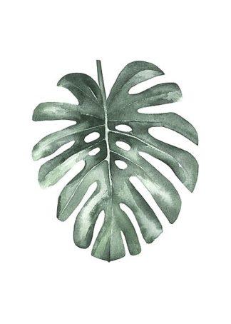 IN99170 - Incado - Water Leaf