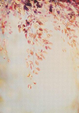 IN99204 - PhotoINC Studio - Fall II