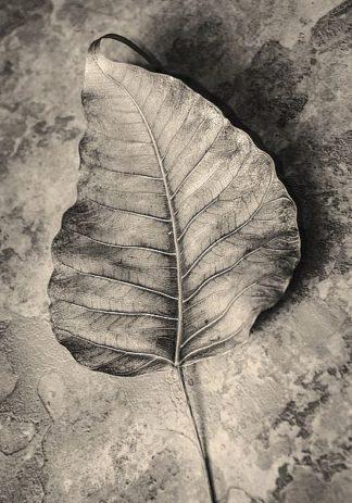 IN99207 - Incado - Dried Leaf