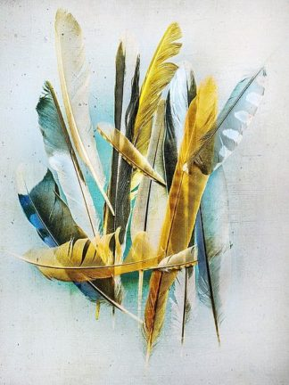 W933D - Wolfe, Kathy - Feather Study No. 2