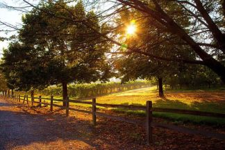 B3613D - Broom, Michael - Dreamland Vineyard