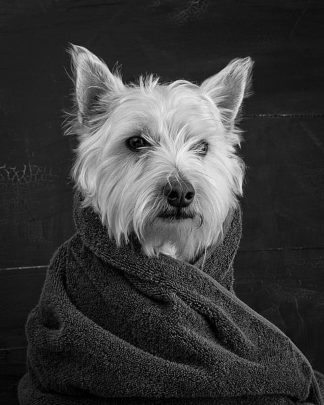 F708D - Fielding, Edward M. - Portrait of a Westy Dog