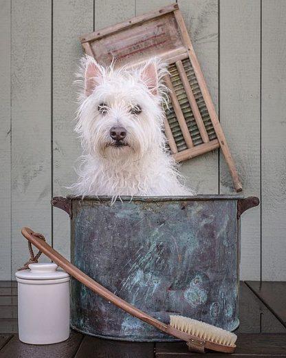 F716D - Fielding, Edward M. - Washing the Dog