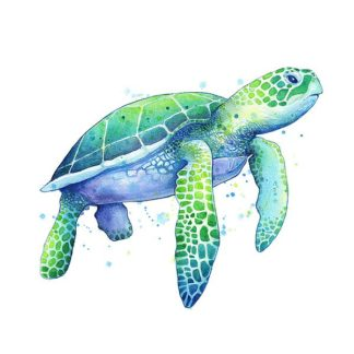 N382D - Nagel, Sam - Green Sea Turtle