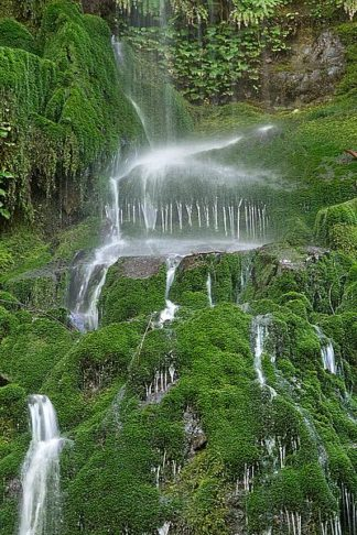 W989D - White, Lynda - Moss Waterfall