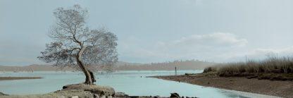 Lagoon Oak Tree