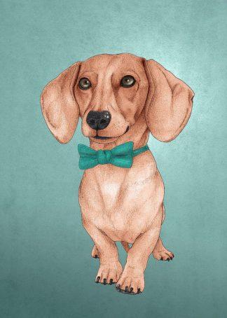 The Wiener Dog