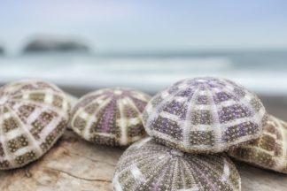 Crescent Beach Shells 8
