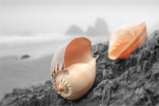 Crescent Beach Shells #20